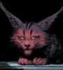 baby_bubastis: (bubastis, kitten)