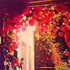 ruxee: (flowers, red)