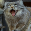 boogiewoogiebuglegal: (Smirking Pallas Cat) (Default)