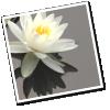 lotusinthebox: (lotus 1)