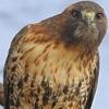 bluetailedhawk: (Curious)