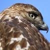 bluetailedhawk: (YOU SAW NOTHING)