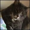 iphidras: (cat2)