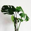 merit: (Plant)