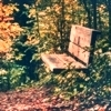 solitude_in_sight: Empty wood bench amidst vegetation (Empty bench)