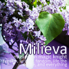 milieva: Purple flowers in a glass on a purple table. (Default)