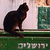 batyatoon: (jerusalem cat)