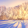 meridian_rose: winter sunlight seen through bare branched trees in a snowy field (seasonal)