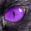 starbit: a purple cat eye surrounded by black fur (Default)