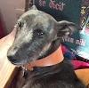 alithea: photo of black hound on sofa (Wilbur sofa)