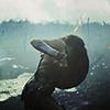 witchka: ((dceu) diana ; shield)