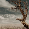 sylvaine: A photo of an old, bent tree, bare of leaves, in the desert, with dramatic storm clouds in the background. ([gen:sj] climate change)