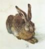 slipjig3: (dürer rabbit)
