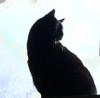 catsmeow: (Willie Silhouette)