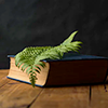 anghraine: a stock photo of a book with a leaf on it (book with leaf)
