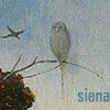 sienamystic: (bosch bird)