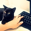 yolomezpa: Black kitten puts paw over the hand of human being who's typing on a black keyboard (Ficlets Icon)