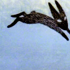 sideways: [watership down] the black rabbit of inle (►couldn't be more opposite)
