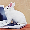 shortfics: White bunny sitting on the keyboard of a white laptop (Bunny on a laptop)