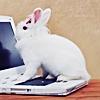 yolomezpa: White bunny sitting on the keyboard of a white laptop (Short Fics Icon)