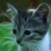 pufik_s_lapkami: (Default)