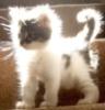 pufik_s_lapkami: (солнечный котенок)