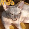 pufik_s_lapkami: (мой любимый кот)