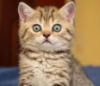 junipersky: (Surprised Kitten)