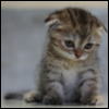 junipersky: (Sad Kitten)