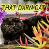 mecurtin: Da Quing in cat form, titled That Darn Cat (That Darn Cat)
