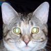 morgi: A face shot of a dim-looking tortoiseshell-tabby cat. (Q*Bert)