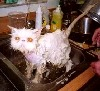 theodosia: (wet cat)