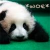 pensnest: a woeful panda on a green field (Sad panda)