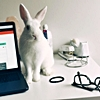 small_prompt_tables: White rabbit sitting on a white desk, next to a computer (Default)