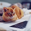 prompt_tables: Orange cat lying before an open white laptop (Orange cat) (Default)