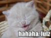 submarine_bells: (hahaha)