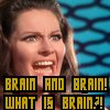 j00j: star trek: brain, what is brain? (brain)