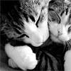 cuda: Two Cats Hugging (kitty hug)