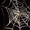 elke_tanzer: autumn web (autumn web)