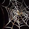elke_tanzer: autumn web (autumn web)