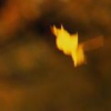 flybywash: (philosophy of flight)