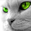 sarcasticat: ([cat] stare)