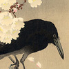 elmyraemilie: Ink painting of crow and cherry blossoms (winter berries)