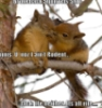 not_hathor: Pic from 'I Can Haz Cheezburgr' (squirrels)