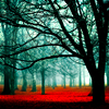 ramiah: (Red Carpeted Forest)