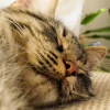 dhae_knight_1: My kitten Zasha (Love at first insult)