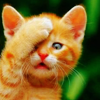 gilbo: (Animals: Facepalm Kitty)