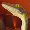 troodon_sapiens: (Exasperated)