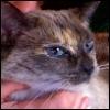 lavendertook: saki scritched under the chin looking sideways at camera (purr, saki's got ur numbah)