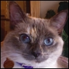 lavendertook: close up of saki alert (Saki)